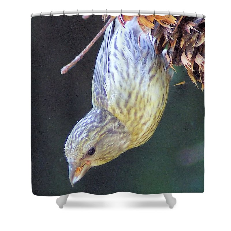 Fowl Shower Curtain featuring the photograph A Little Bird Eating Pine Cone Seeds by Jeff Swan
