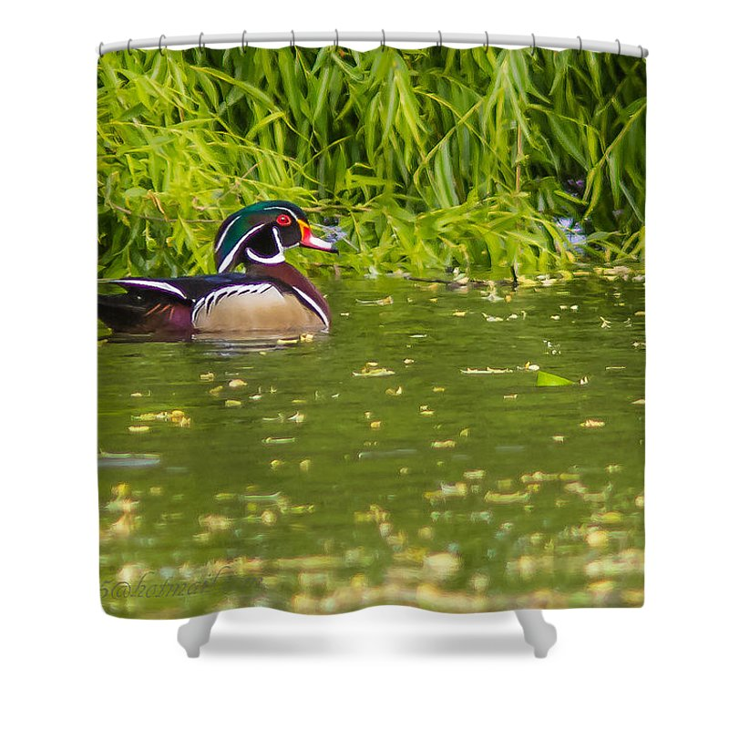 Wine Grapes Shower Curtain featuring the photograph A Lone Male Wood Ducks by Brian Williamson