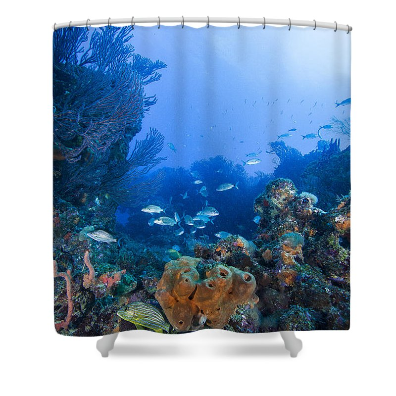 Angle Shower Curtain featuring the photograph A Quiet Underwater Day by Sandra Edwards