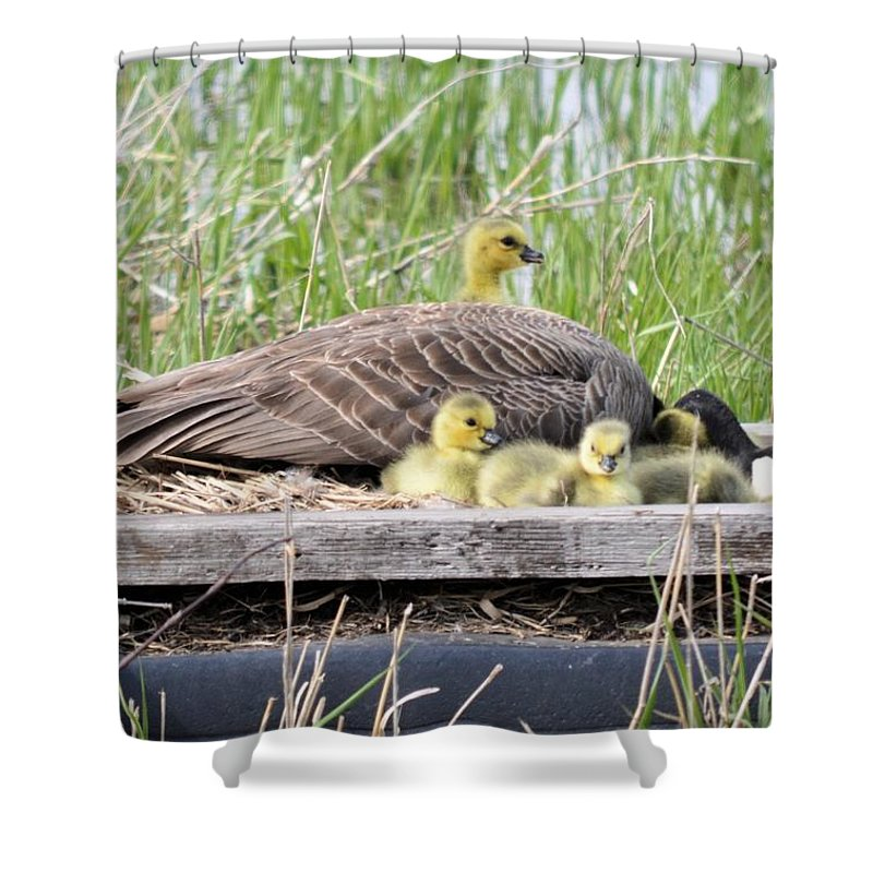 Goose Shower Curtain featuring the photograph A Real Mother Goose by Bonfire Photography