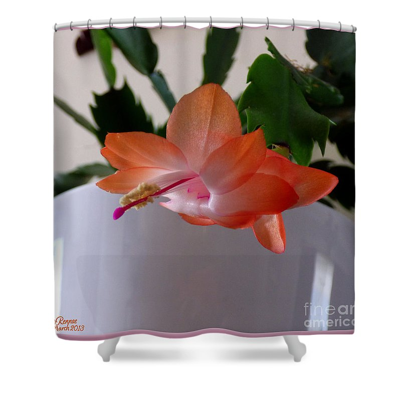 Cactus Shower Curtain featuring the photograph A Single Blossom by Rennae Christman