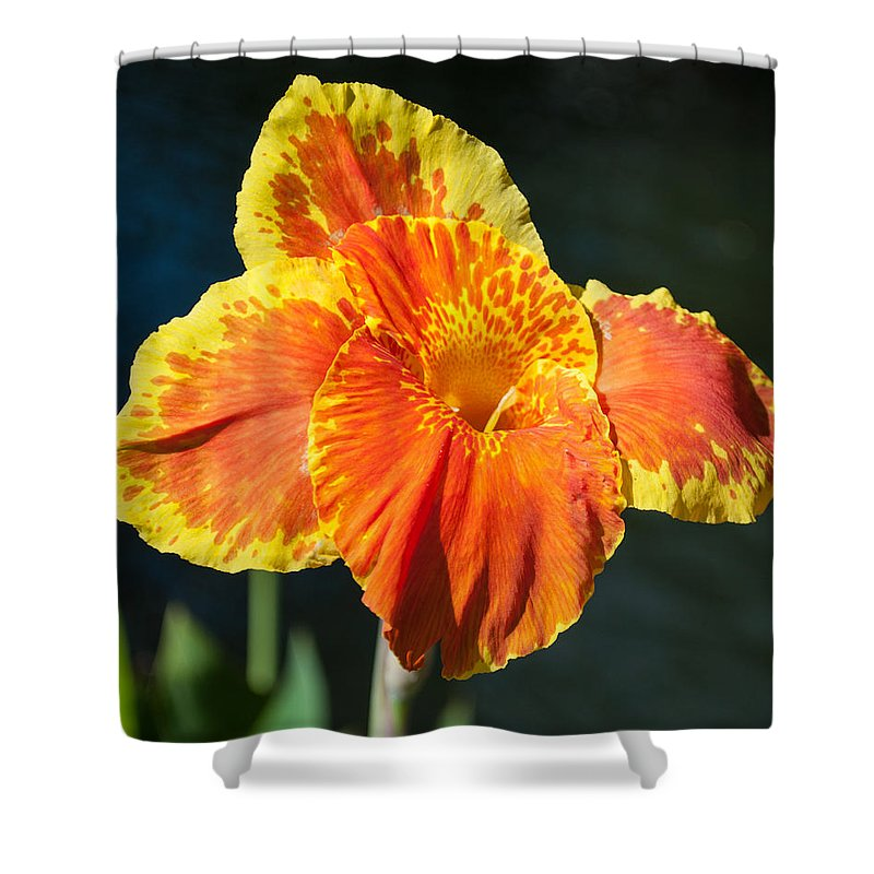 Close Up Shower Curtain featuring the photograph A Single Orange Lily by Jill Mitchell