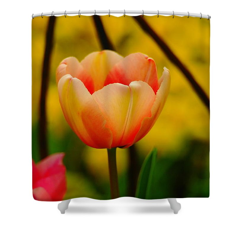 Flowers Shower Curtain featuring the photograph A Single Tullip by Jeff Swan