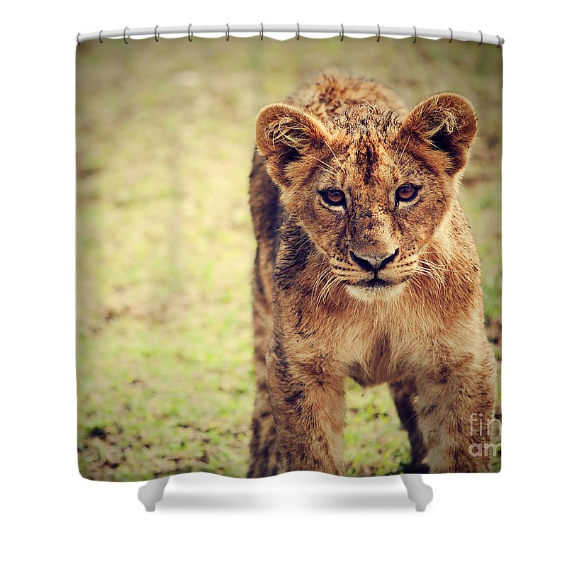 Africa Shower Curtain featuring the photograph A Small Lion Cub Portrait. Tanzania by Michal Bednarek
