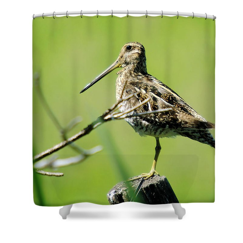 Snipes Shower Curtain featuring the photograph A Snipe by Jeff Swan