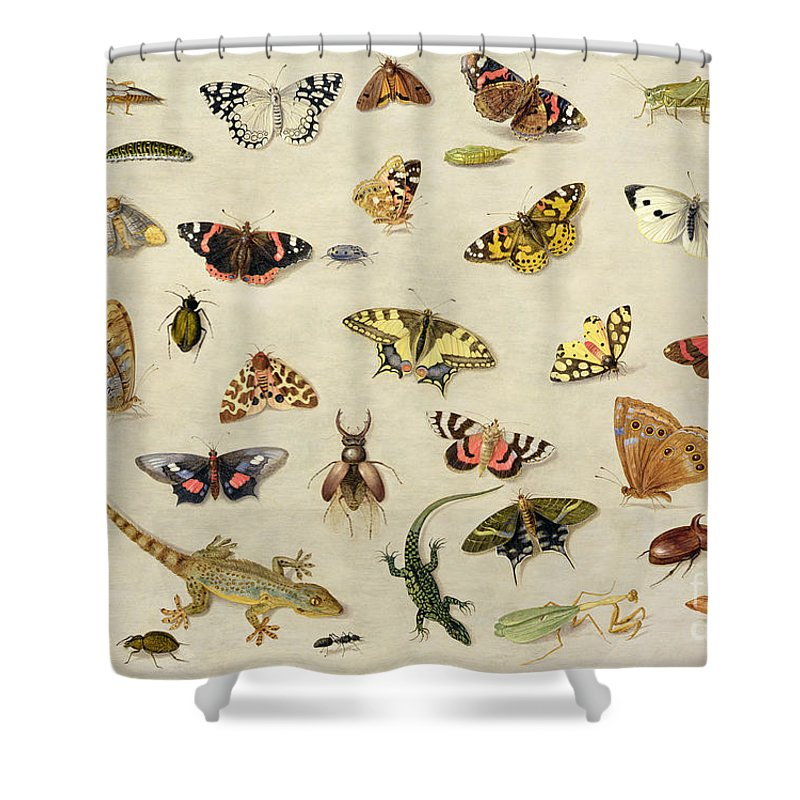 Collection Shower Curtain featuring the painting A Study Of Insects by Jan Van Kessel