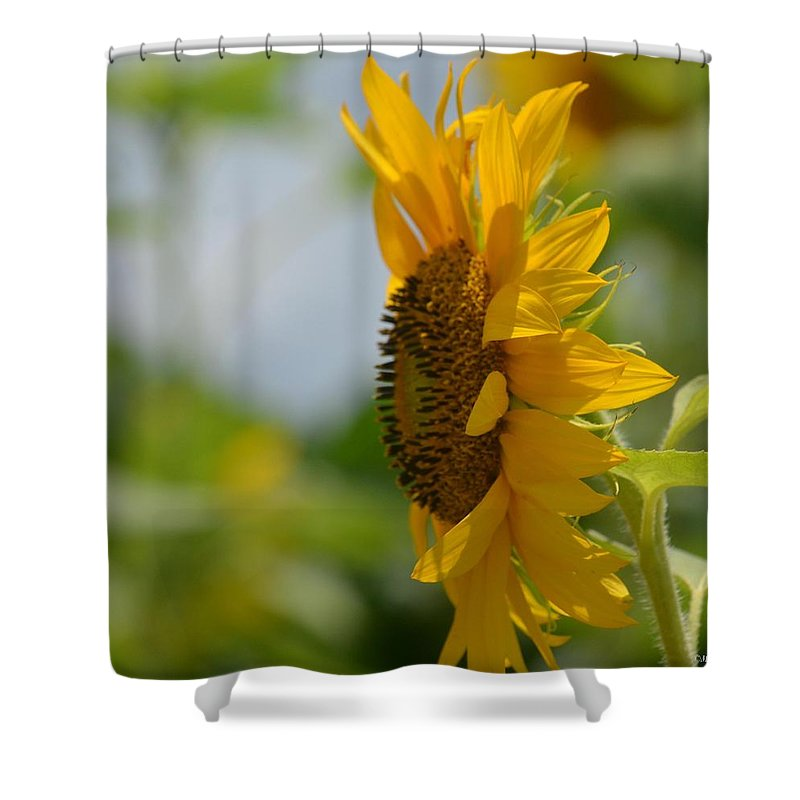 A Sunflower Profile Shower Curtain featuring the photograph A Sunflower Profile by Maria Urso