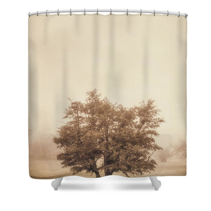 Tint Shower Curtains