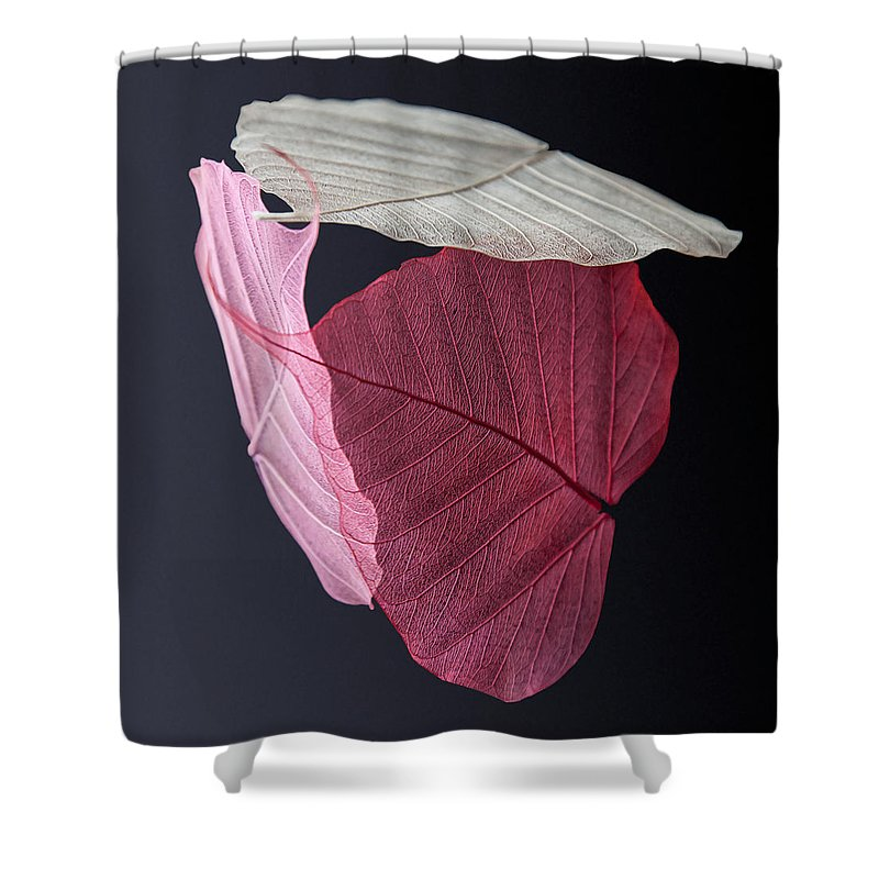 Leaves Shower Curtain featuring the photograph A Trinity Of Leaves by Maggie Terlecki