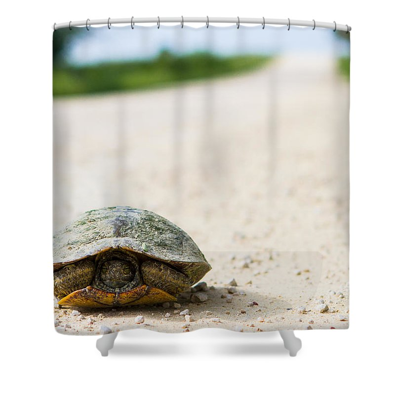 Turtle On A Road Shower Curtain featuring the photograph A Turtle On A Texas Farm Road by Ellie Teramoto