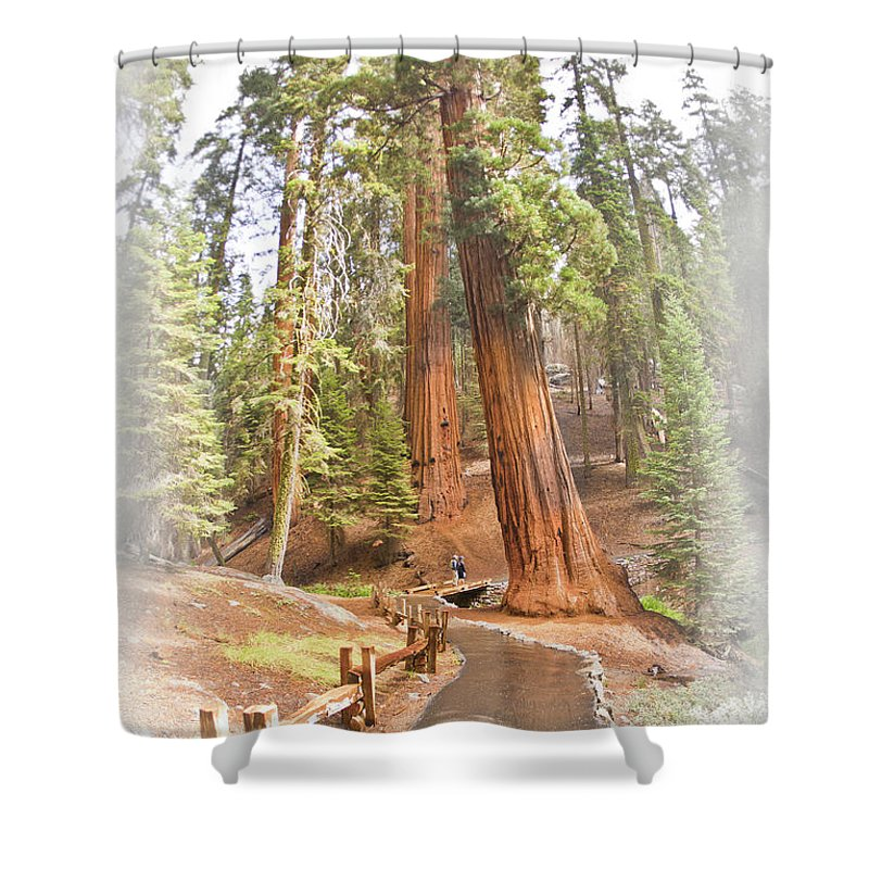 Giant Shower Curtain featuring the photograph A Walk Among The Giant Sequoias by Angela Stanton