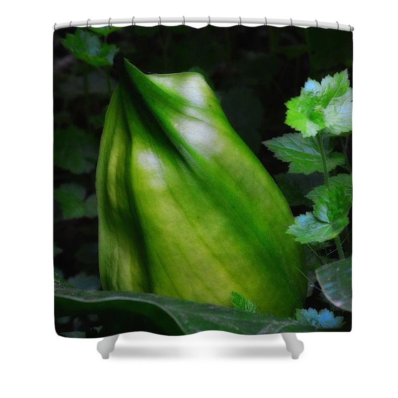 Newel Hunter Shower Curtain featuring the photograph A Walk In The Woods1 by Newel Hunter