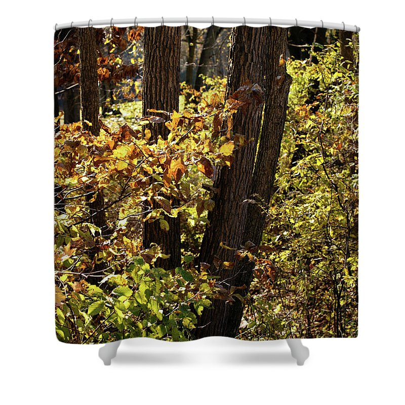 Woods Shower Curtain featuring the photograph A Walk Through The Woods - 1 by Linda Shafer