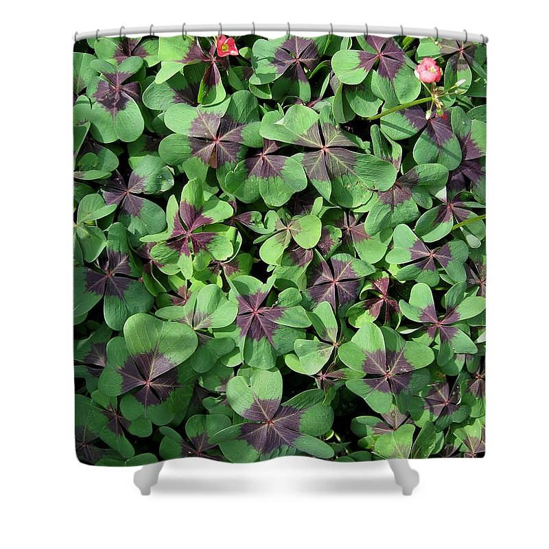 Mccombie Shower Curtain featuring the photograph A Whole Lot Of Good Luck by J McCombie