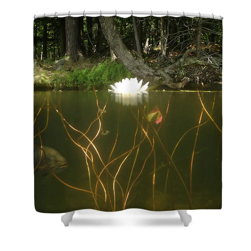 Lily Pad Shower Curtain featuring the photograph Above And Below by Mark Janeck