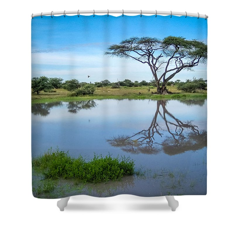 100324 Botswana & Zimbabwe Expeditions Shower Curtain featuring the photograph Acacia Tree by Gregory Daley MPSA