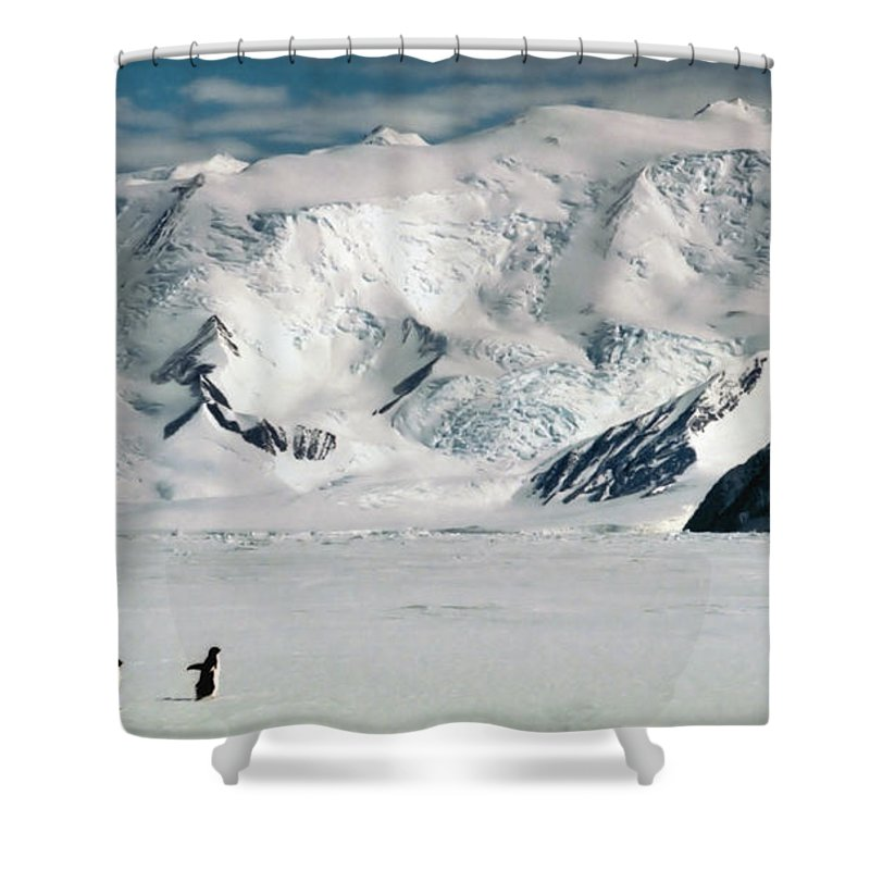 Antarctic Continent Shower Curtain featuring the photograph Adelie Penguins At Cape Hallett by Carole-Anne Fooks