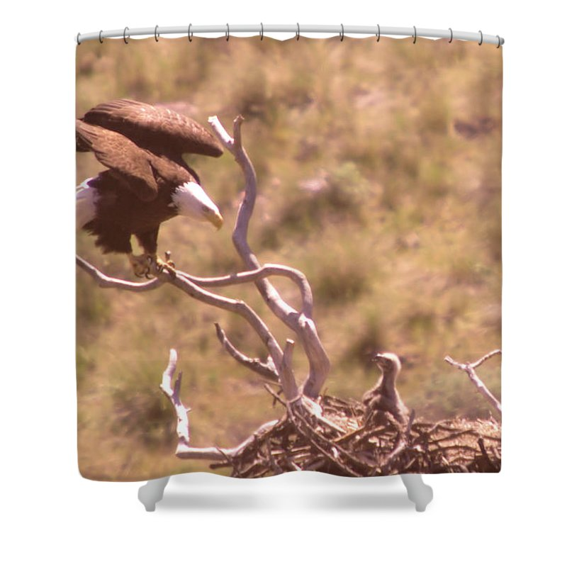 Eagles Shower Curtain featuring the photograph Adult Eagle With Eaglet by Jeff Swan
