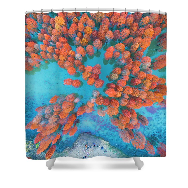 Tranquility Shower Curtain featuring the photograph Aerial Drone View With Fir Tree Fall by Yaorusheng