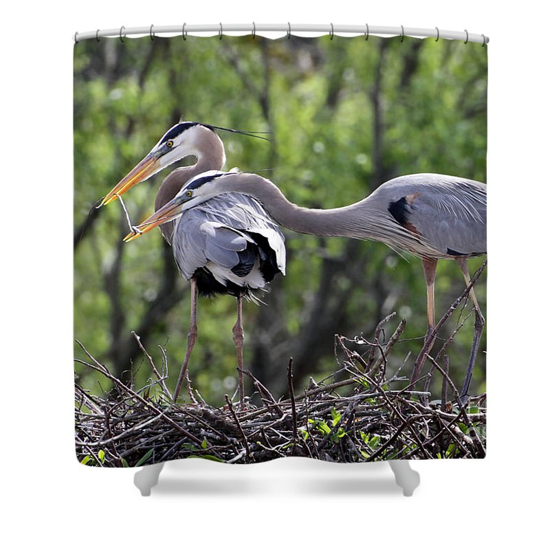 Animal Shower Curtain featuring the photograph Affectionate Great Blue Heron Mates by Sabrina L Ryan