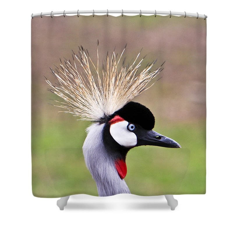 Golden Shower Curtain featuring the photograph African Crowned Crane Portrait by Douglas Barnett