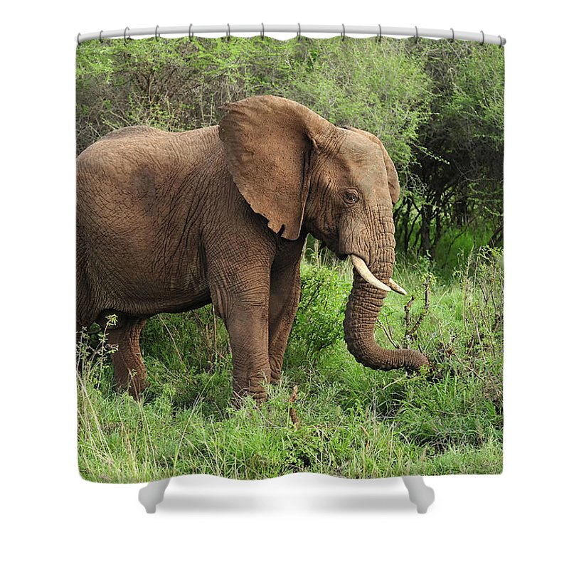 Thomas Marent Shower Curtain featuring the photograph African Elephant Grazing Serengeti by Thomas Marent