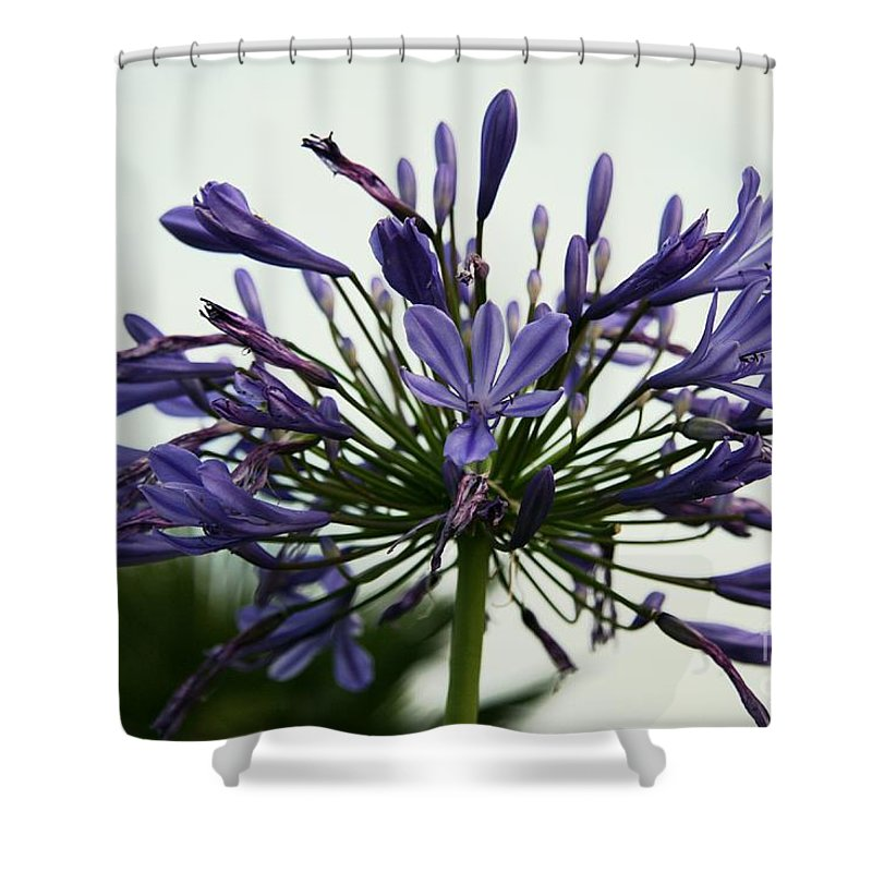 Lily Shower Curtain featuring the photograph African Liliy I by Christiane Schulze Art And Photography