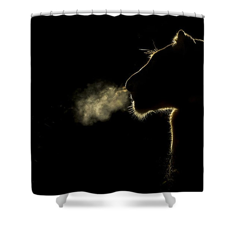 Nis Shower Curtain featuring the photograph African Lioness Breath Sabi Sands South by Brendon Cremer