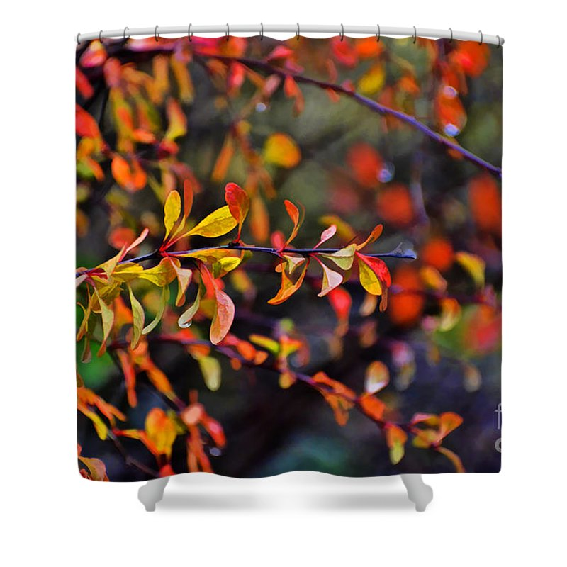 Autumn Shower Curtain featuring the photograph After The Autumn Rain 1 by Debbie Portwood