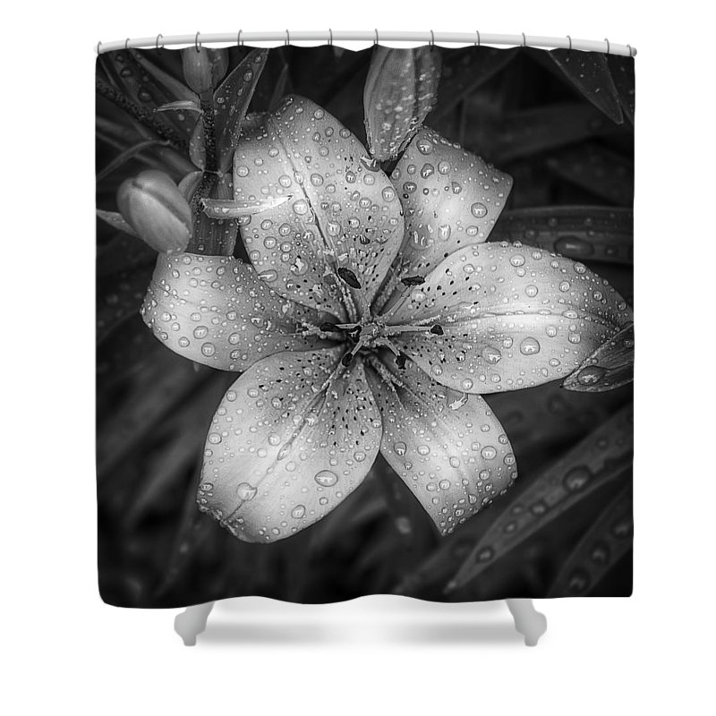 Tiger Lily Shower Curtain featuring the photograph After The Rain by Scott Norris