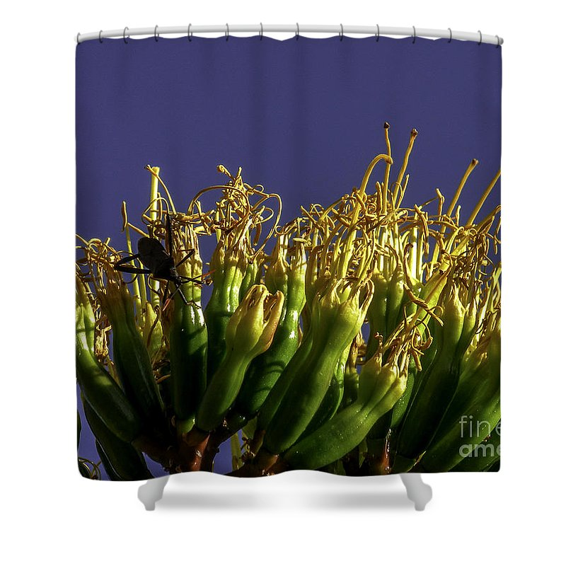 Lovejoy Shower Curtain featuring the photograph Agave Bloom by Lovejoy Creations