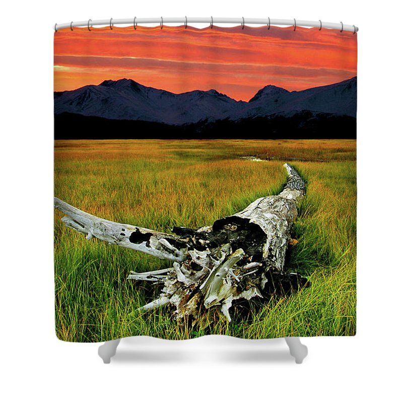 An Old Tree Shower Curtain featuring the photograph Aging Beautifully by Ron Day