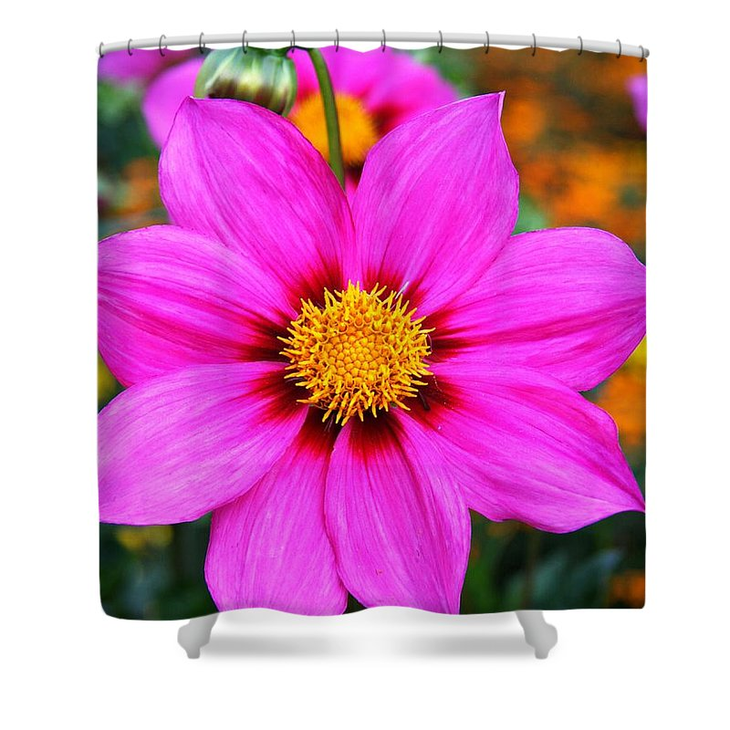 Dahlia Shower Curtain featuring the photograph Aglow by Christiane Schulze Art And Photography