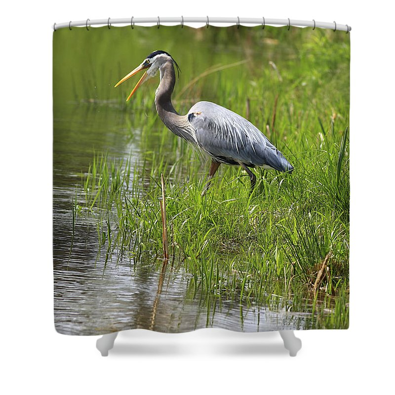 Bird Shower Curtain featuring the photograph Ah That Tastes Good by Deborah Benoit