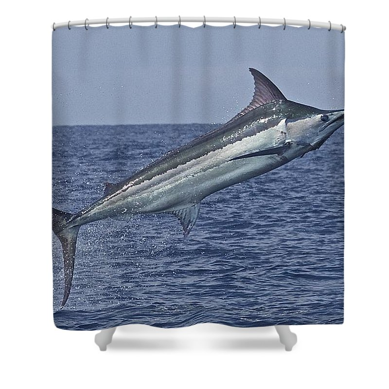 Blue Marlin Image Shower Curtain featuring the drawing Air Borne by Carol Lynne