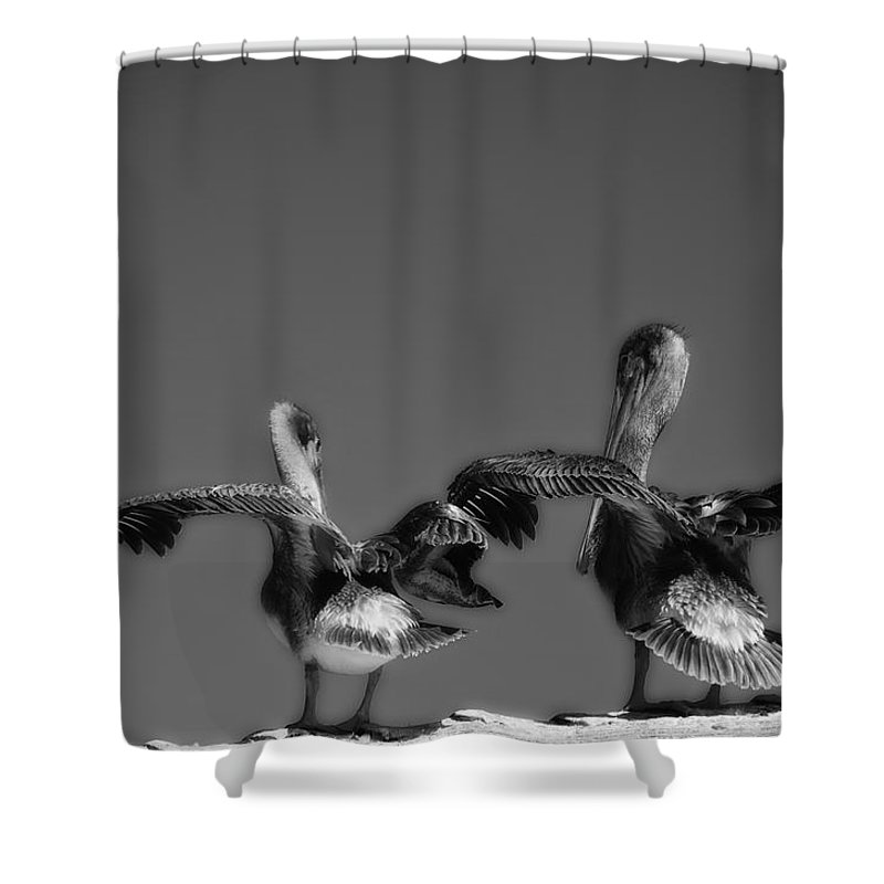 Monterey Ca Shower Curtain featuring the photograph Airing Out by Ron White
