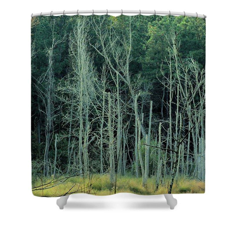Alabama Autumn Marsh Shower Curtain featuring the photograph Alabama Autumn Marsh by Maria Urso