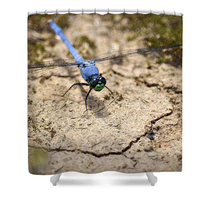 Alabama Shower Curtain Featuring The Photograph Dragonfly By Verana Stark