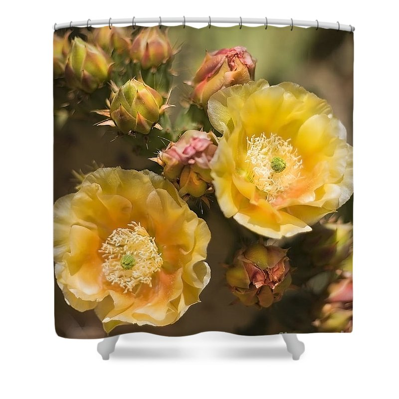 Vertical Shower Curtain featuring the photograph 'albispina' Cactus Blooms by Richard J Thompson