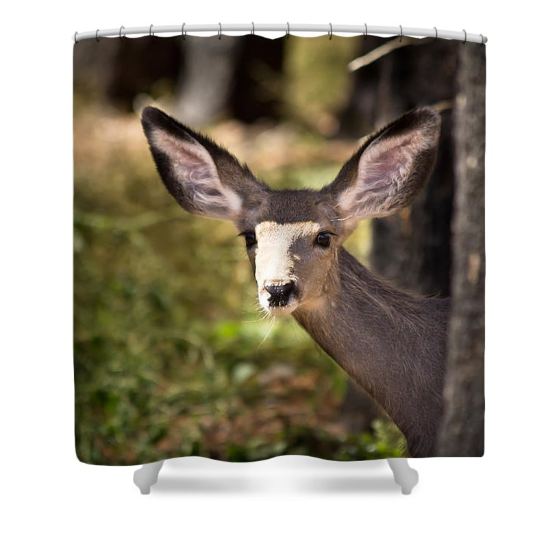 Fawn Shower Curtain featuring the photograph All Ears - Mule Deer Fawn - Casper Mountain - Casper Wyoming by Diane Mintle