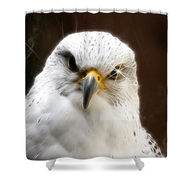 Birds Shower Curtain featuring the photograph All Fired Up by Steve McKinzie