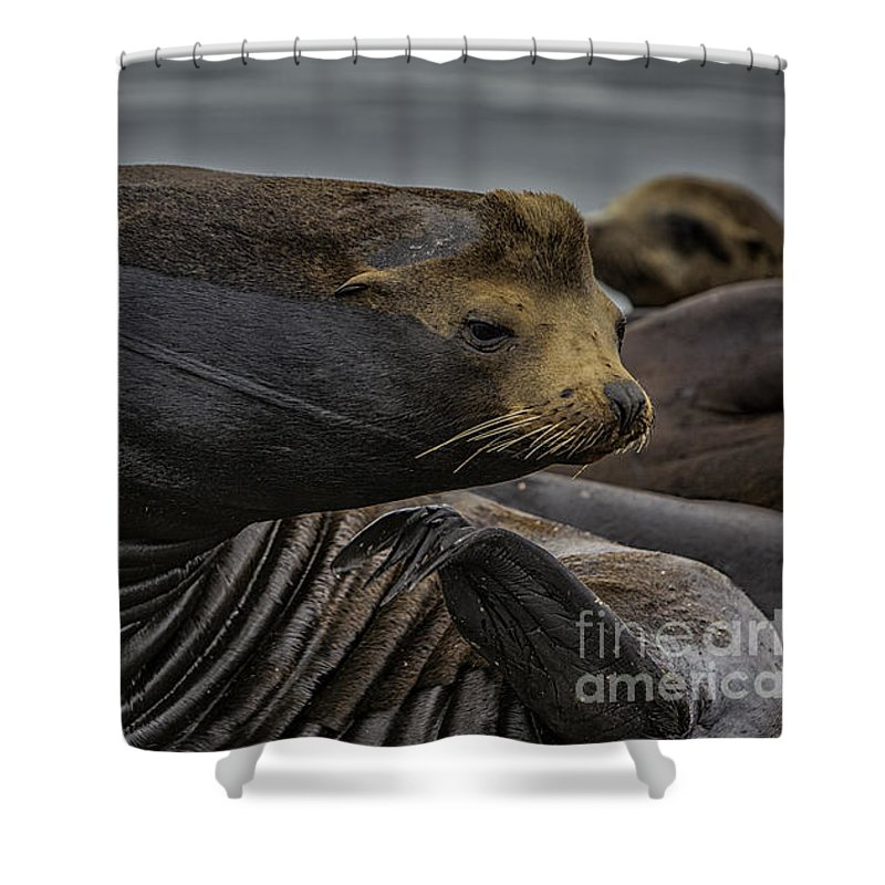 Wild Shower Curtain featuring the photograph All In A Days Work by David Millenheft