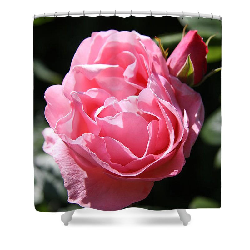 Rose Shower Curtain featuring the photograph All Shades Of Pink by Christiane Schulze Art And Photography