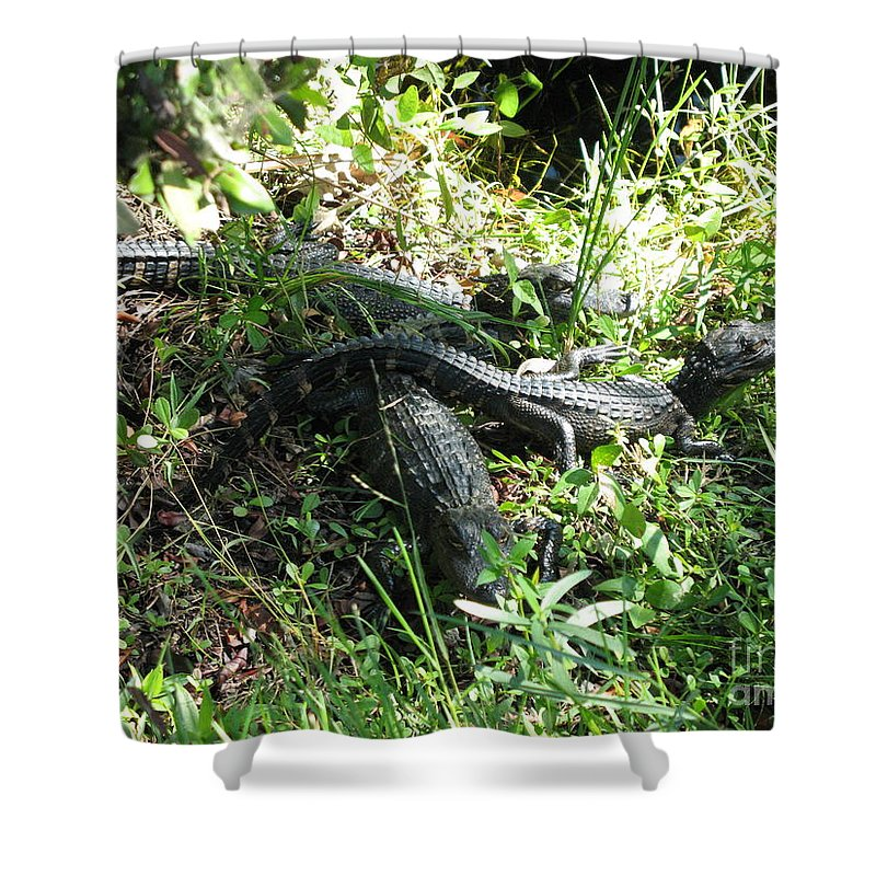 Alligator Shower Curtain featuring the photograph Alligatorbabys Waiting For Mommy by Christiane Schulze Art And Photography