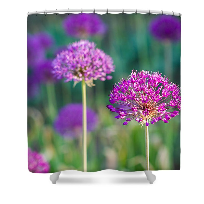 Flower Shower Curtain featuring the photograph Allium Flowers - Featured 3 by Alexander Senin