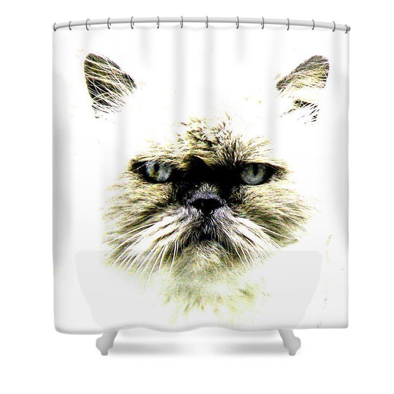 Cat Shower Curtain featuring the photograph 'allo Kitty by Paul Sutcliffe