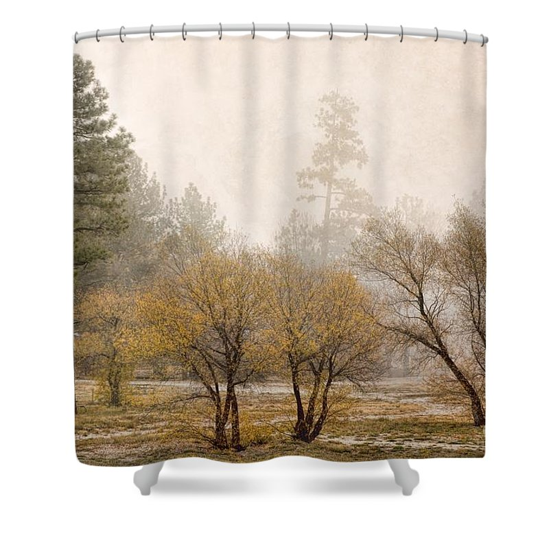 San Bernardino Forest Shower Curtain featuring the photograph Almost Winter by Peggy Hughes
