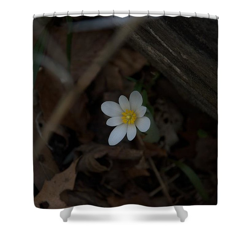 Forest Shower Curtain featuring the photograph Alone by Joseph Yarbrough