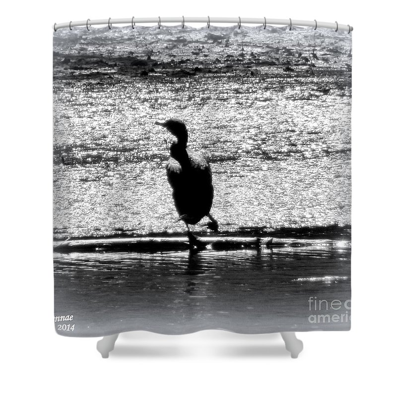 Birds Shower Curtain featuring the photograph Alone Time by Rennae Christman