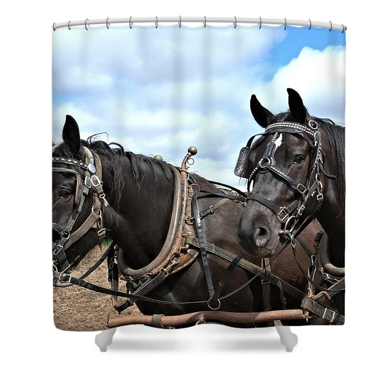Draft Horse Shower Curtain featuring the photograph Al's Team by Valerie Kirkwood